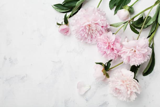 Een rouwbloem Gouda vol met betekenissen