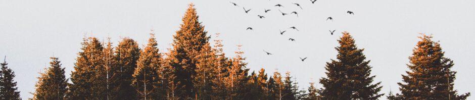 jagen op vogels